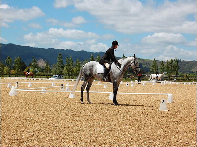 Horse Arena Surfaces Equestrian Surfaces New Zealand