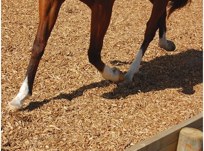 Riding The Cushion >> Dressage arena surfaces Auckland, Buying wood chips North Shore